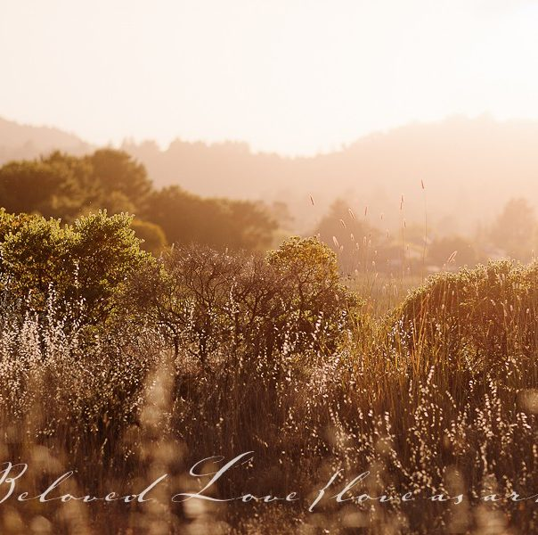 california summer © beloved love photography #loveasart