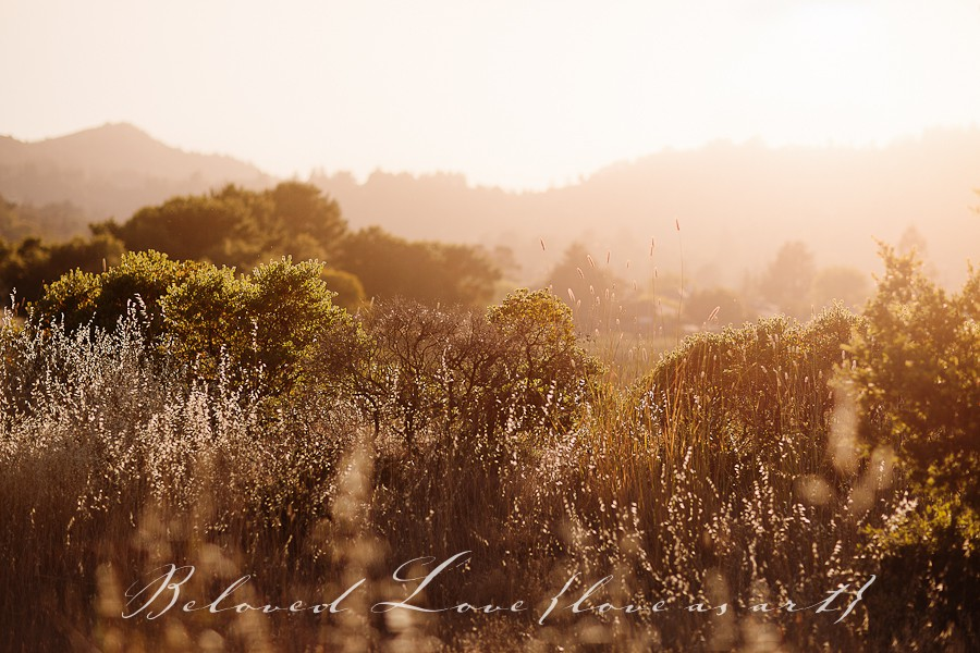 destination fine art wedding photographer california summer © beloved love photography #loveasart