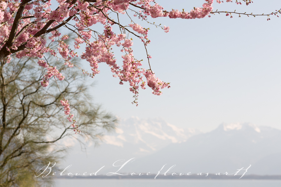 mountains and spring cherry blossoms - montreux wedding photographer © beloved love photography #loveasart